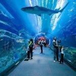 DXB Aquarium Tunnel