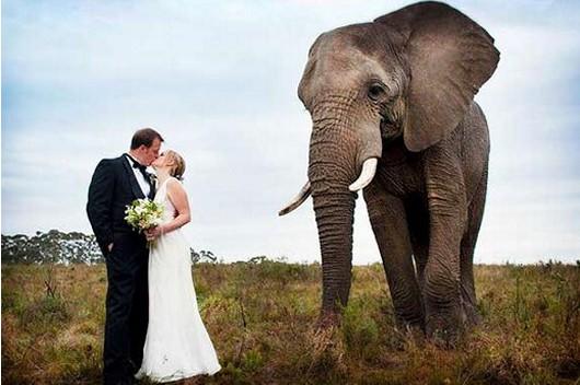 Knysna Elephant Park Wedding 01