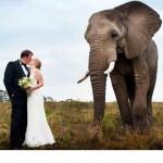 knysna-elephant-park-wedding
