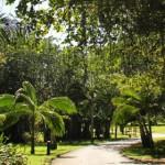 maritim_garden
